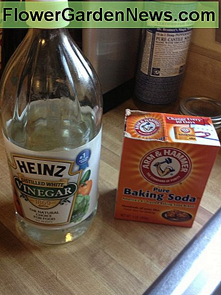 Dynamic Duo: White Vinegar and Baking Soda