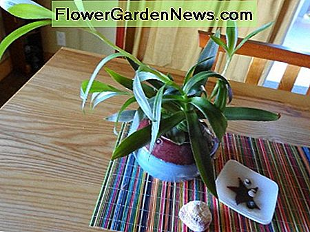 Houseplants watered and fertilized weekly.