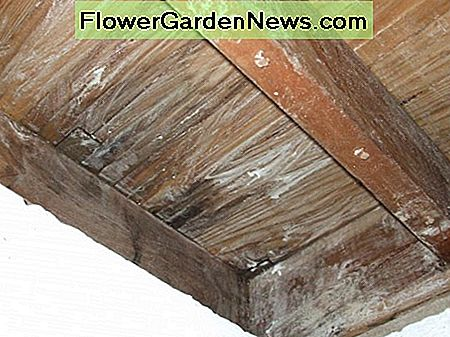 Borax på Wooden Joists for Mold behandling
