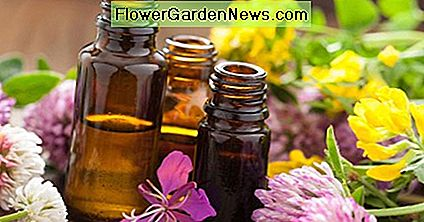 Essential oils are the best flavors and excellent natural disinfectants.