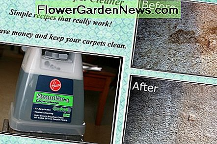 Make simple, effective carpet cleaner solution and save money!