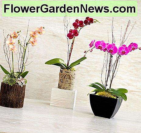 Basisprincipes van Orchid Care