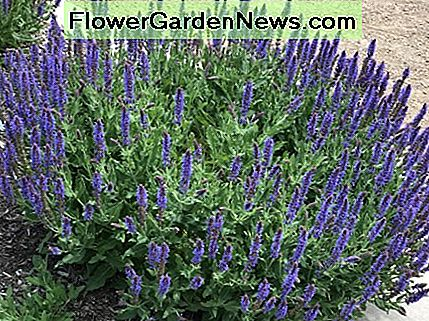 Lavendar is a great choice for dry climates and the smell is heavenly.