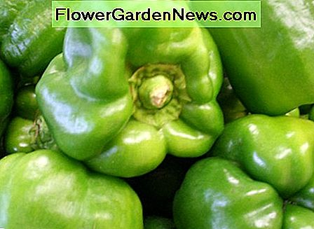 Peppers can be grown in containers.