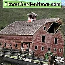 Classic red barn painted with milk paint