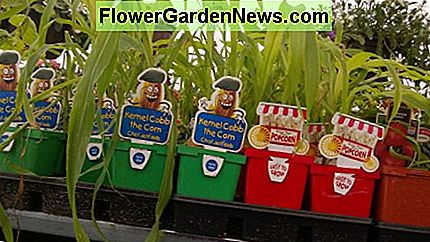 Fun starter plants designed to appeal to kids.