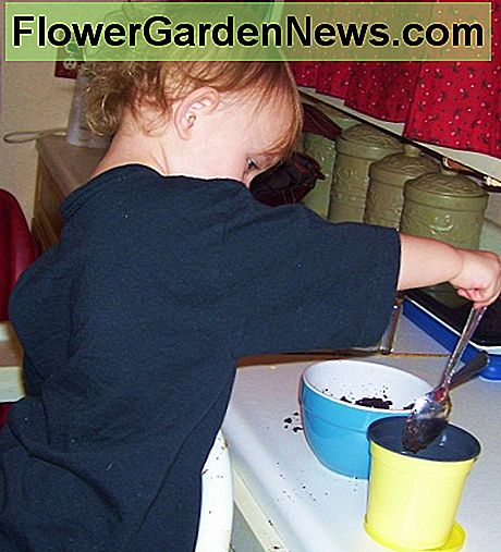 Planting a daisy seed kit for kids.