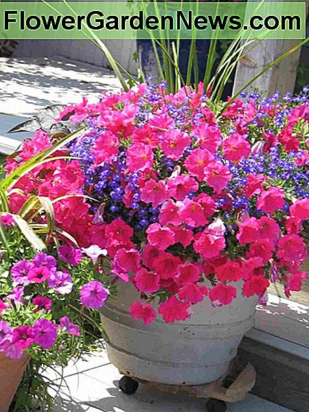 Healthy plants that look attractive will makesure your entrance or balcony is welcoming.