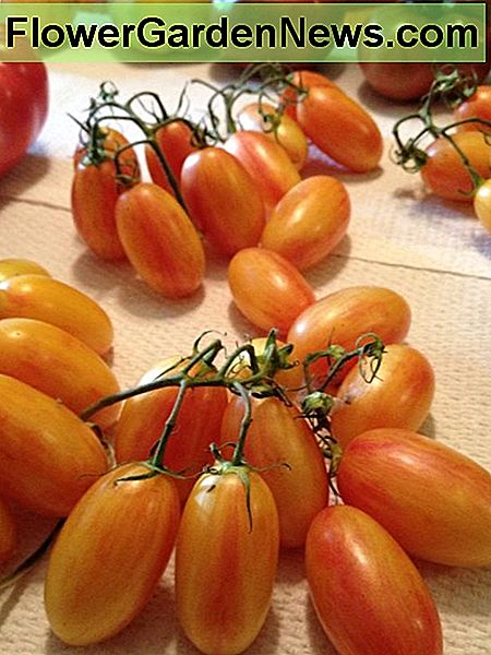 Cherry tomatoes from my brother's garden.