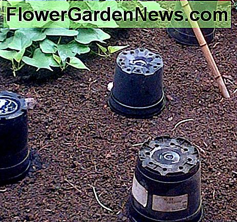 Upturned pots placed over plants at night help to protect against snails and bigger pests