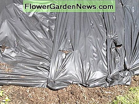 Adhering gardening tarp down before planting.