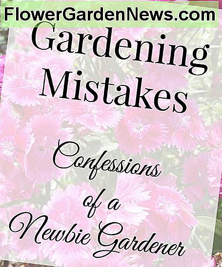 Gardening Mistakes: Confessions of Newbie Gardener
