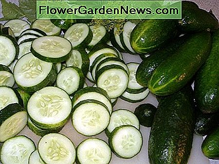 Cucumbers can be sliced and then chilled. You can sprinkle the cucumbers with salt and pepper or marinade them in vinegar for an hour or so.