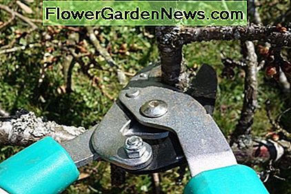 Pruning shears and clippers come in various sizes.