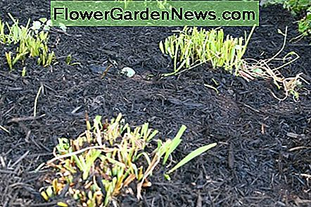 A thick layer of bark mulch will discourage weed growth next spring.