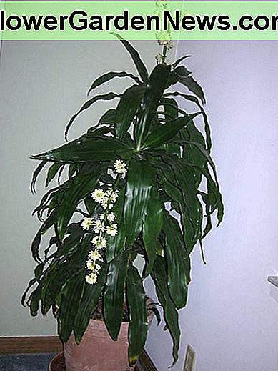 a flowering plant, it adds character to a room