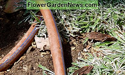 This soaker hose is being used to water a patch of ground cover surrounding a few drought tolerant flowering plants. Notice the hole in the center hose.