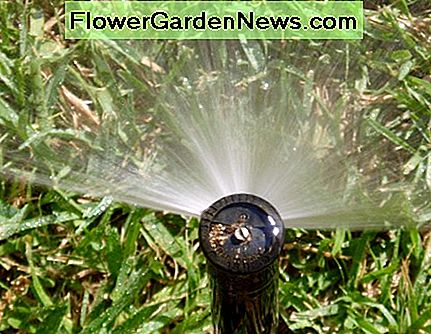 Here's a spray head nozzle up close. This nozzle is located on the side of the lawn and has a 180 degree arc.