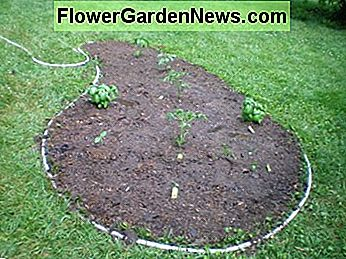 Pop Your Plants or Seeds Into the Wet Soil