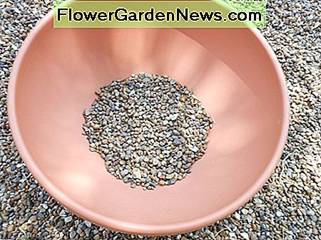Choose a container and fill it with about one inch of gravel. This will help improve drainage.