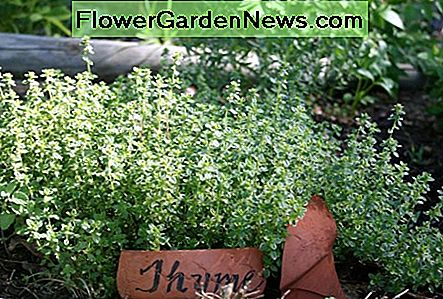 A Sharpie & a broken clay pot are all you need to make a simple plant marker for your garden.