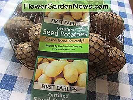 Planting Seed Potatoes