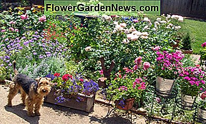 Hond Vriendelijke Tuin : Een hondvriendelijke tuin planten 🌹 nuttige tips hoveniers en