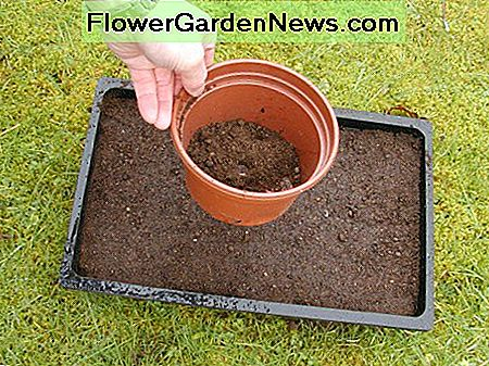 .......larger seeds can be covered with a thin layer of compost. A flower pot acts like a pepper pot and is useful for sprinkling compost