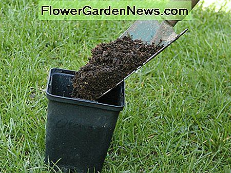 Fill some pots with potting compost or use your own homemade stuff like I did