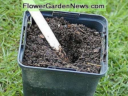 Make a hollow in the compost