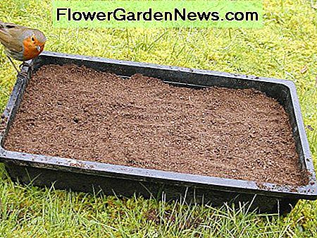 The seed tray doesn't need to be totally filled because seedlings will eventually be transplanted