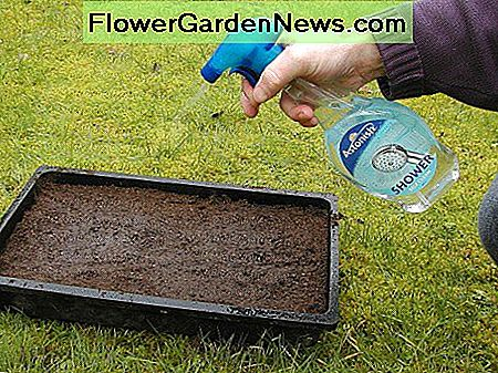 Moisten the surface of the compost with a water spray mister