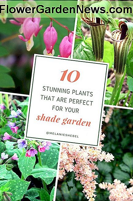 10 Shade-Loving Plants til din have