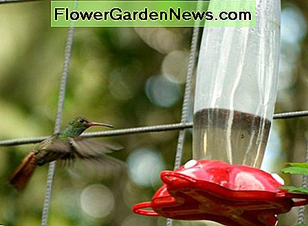 A bird approaches a feeder