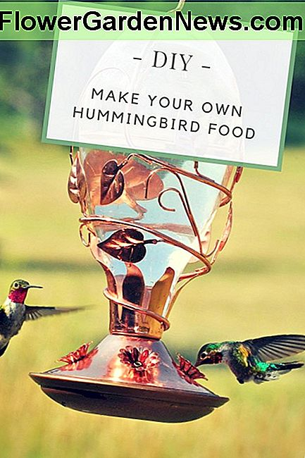 O rețetă Super Easy pentru Hummingbird Food