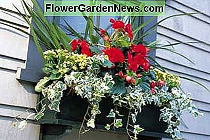 Window Boxes - Beauty to Homes toevoegen