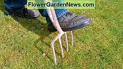 Forking a lawn at 1 foot intervals helps to aerate and improve drainage. Drive the fork fully down into the ground