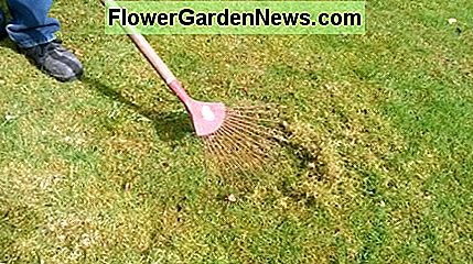 Give your lawn a thorough rake. This helps to remove moss and dead vegetation