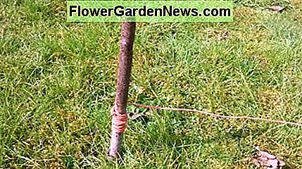 Use, string to mark out the lawn