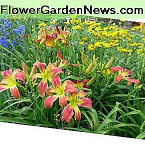 Delphinium for height, mounding daisies for form, and the daylily anchors the design with color and contrast.