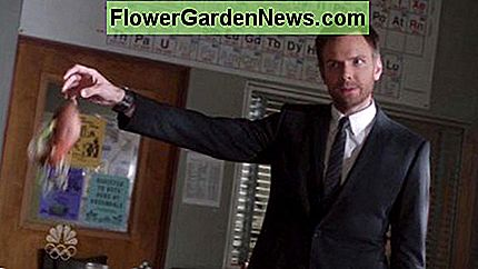 Joel McHale holding up the sweet potatoe plant as evidence in NBC's Community paradoy episode of Law and Order! Growing plants from sweet potatoes!