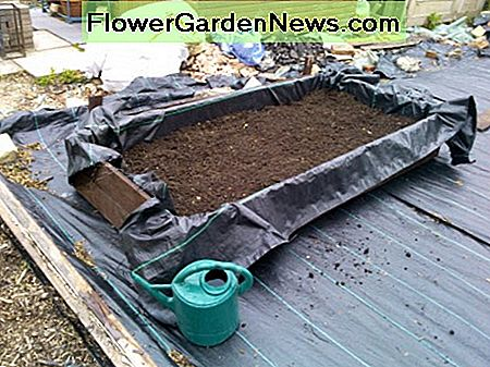 Use good quality compost in raised beds