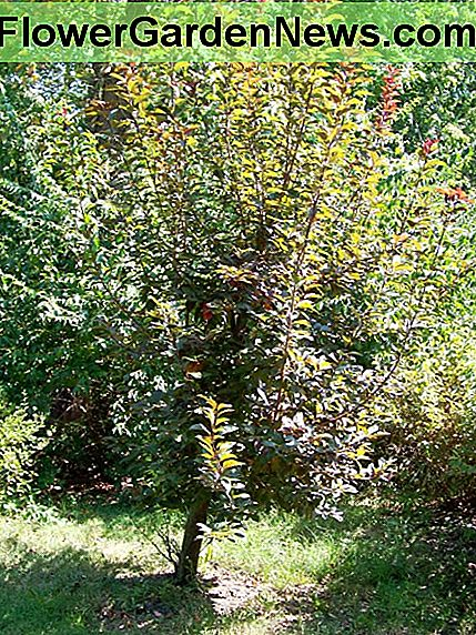 September -- the single branches are developing branches.