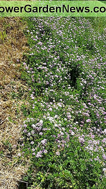 Embankment stabilized with crown vetch