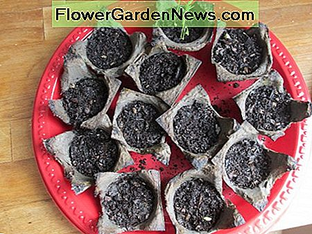 Place seed cups in a waterproof container.
