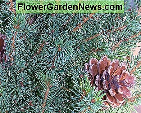 Decorative pine cones were attached to the tree from LL Bean with long pieces of thick florist's wire.