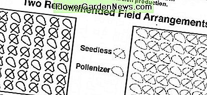 Recommended plant spacing for best pollination