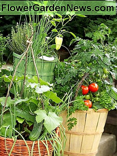 Fresh Ideas for Growing Vegetables in Containers