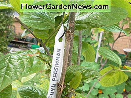 Label the young fruit trees with your tags