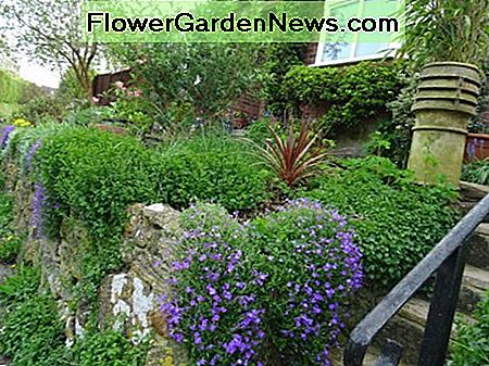 A Springtime rockery behind a stone retaining wall fronting a modern bungalow in a Wiltshire village